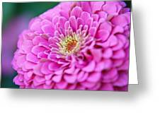 Flower Macro Greeting Card by Edward Myers