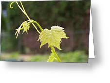 Grapevine Greeting Card by Heather L Wright