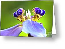 Iris Flower Greeting Card by Heiko Koehrer-Wagner