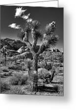 Joshua Tree And Cloud Greeting Card by Peter Tellone
