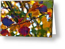 Leaves Of Autumn Greeting Card by Stephen Anderson