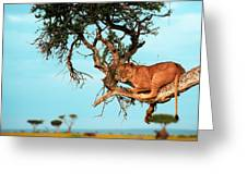 Lioness In Africa Greeting Card by Sebastian Musial