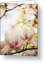 Magnolia Greeting Card by Jelena Jovanovic