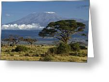 Mount Kilimanjaro Greeting Card by Michele Burgess