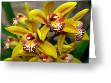 Orchid 9 Greeting Card by Marty Koch