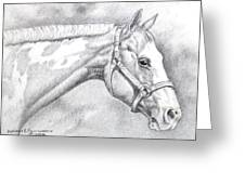 Paint Horse Greeting Card by Dorothy Coatsworth