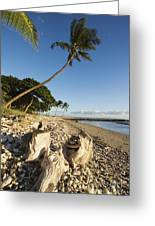 Palm And Driftwood Greeting Card by Ron Dahlquist - Printscapes