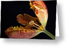 Parrot Tulip 26 Greeting Card by Robert Ullmann