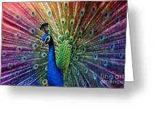 Peacock Greeting Card by Hannes Cmarits