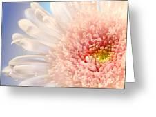 Pink Daisy  Greeting Card by Sandra Cunningham