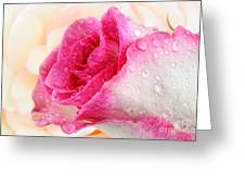 Pink Greeting Card by Mark Johnson