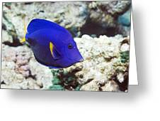 Powder-blue Tang Greeting Card by Georgette Douwma
