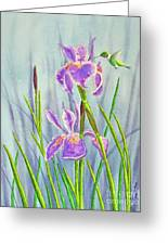 Purple Dutch Iris And Hummer Greeting Card by Kathryn Duncan