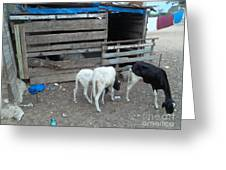Reality Bites Goats Greeting Card by Fania Simon