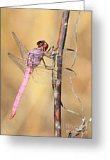 Red Dragonfly Portrait Greeting Card by Carol Groenen