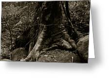 Roots And Rocks Greeting Card by Amarildo Correa