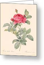 Rosa Gallica Pontiana Greeting Card by Pierre Joseph Redoute