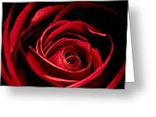 Rose I Greeting Card by Andreas Freund