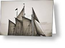 Schooner Pride Tall Ship Charleston Sc Greeting Card by Dustin K Ryan