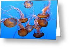 Sea Nettles Ballet 1 Greeting Card by Diane Wood