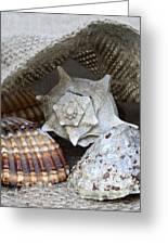Seashells Greeting Card by Frank Tschakert