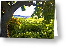 Shady Vineyard Greeting Card by Patricia Stalter