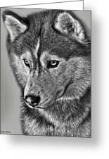 Siberian Husky 2 Greeting Card by Larry Linton