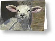 spring lamb Greeting Card by John  Reynolds