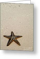 Starfish Partially Buried In White Sand Greeting Card by Sami Sarkis