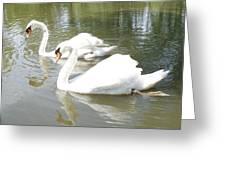 Swan Pair Greeting Card by Geralyn Palmer