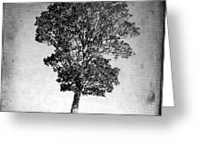 Textured Tree Greeting Card by Bernard Jaubert
