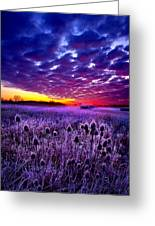 The Audience Greeting Card by Phil Koch