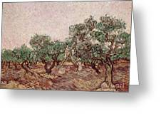 The Olive Pickers Greeting Card by Vincent van Gogh