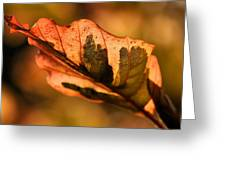 Tri-color Beech In Autumn Greeting Card by Angela Rath