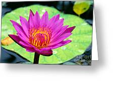 Water Lily Greeting Card by Bill Brennan - Printscapes