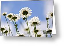 White Daisies Greeting Card by Elena Elisseeva