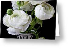 White ranunculus in black and white vase Greeting Card by Garry Gay