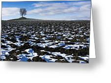 Winter Tree. Greeting Card by Bernard Jaubert