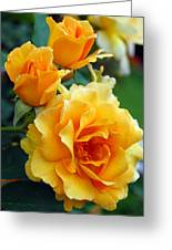 Yellow Roses Greeting Card by Amy Fose