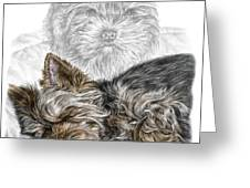 Yorkie - Yorkshire Terrier Dog Print Greeting Card by Kelli Swan
