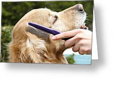 Dog Grooming Greeting Card by Photo Researchers Inc