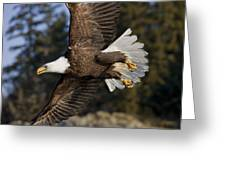 Bald Eagle Greeting Card by John Hyde - Printscapes