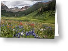 Alpine Flowers In Rustler's Gulch, Usa Greeting Card by Bob Gibbons