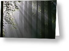In the California Redwood forest. Greeting Card by Ulrich Burkhalter