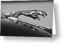 Jaguar Hood Ornament 2 Greeting Card by Jill Reger