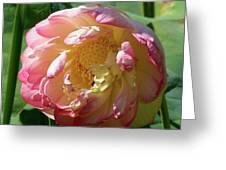 Lotus Blossom  Greeting Card by Crystal Garner