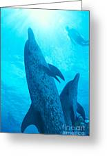 Pair Of Spotted Dolphins Greeting Card by Ed Robinson - Printscapes