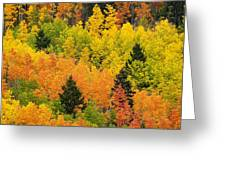 Quaking Aspen And Ponderosa Pine Trees Greeting Card by Ralph Lee Hopkins
