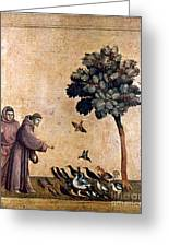 St. Francis Of Assisi Greeting Card by Granger