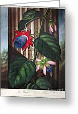 Thornton: Passion-flower Greeting Card by Granger